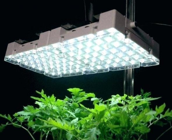 grow light plant