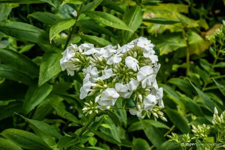 From Princess Diana Sunken Garden white garden Kensington Palace