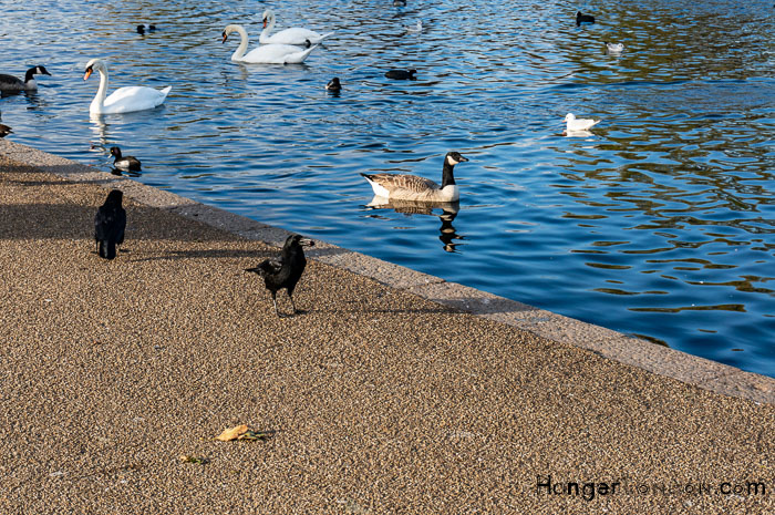 Hyde Park Serpentine
