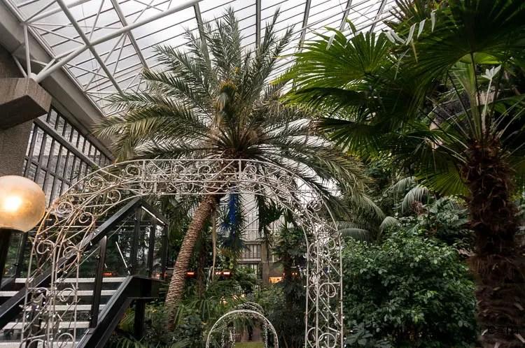traditional shape palm tree