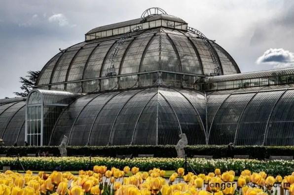 Kew Gardens Yellow Tulips Palmhouse parterre