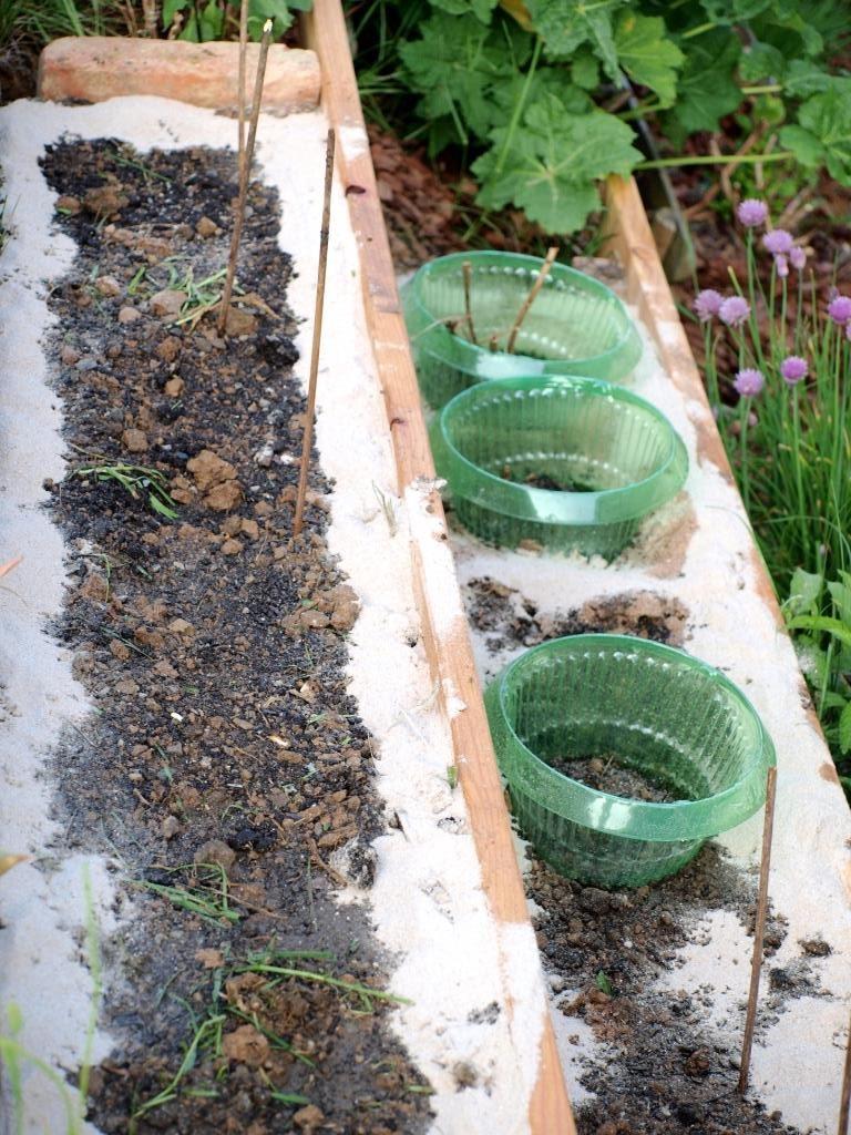 Die Pflanzen werden einfach mit Schneckenbarriere umrandet