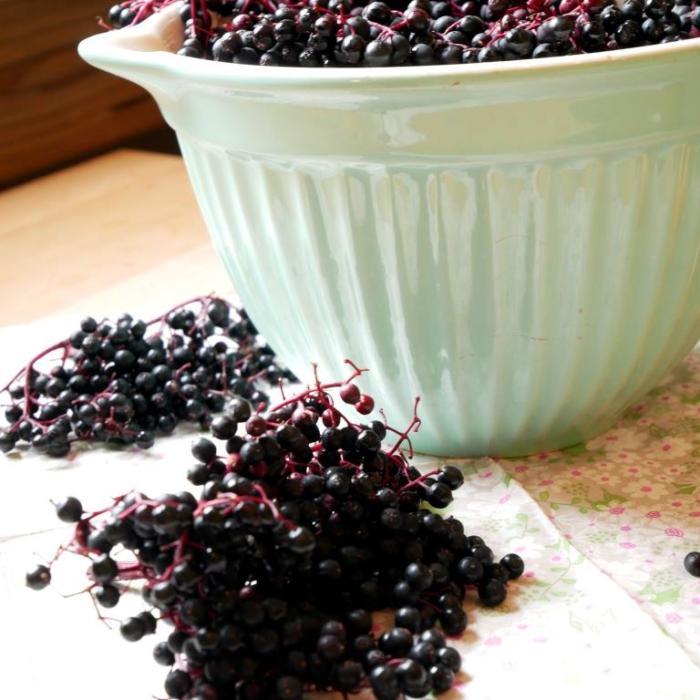 Welchen Beitrag Holunderbeeren zur Hausapotheke leisten - inklusive Rezept für Hollerröster