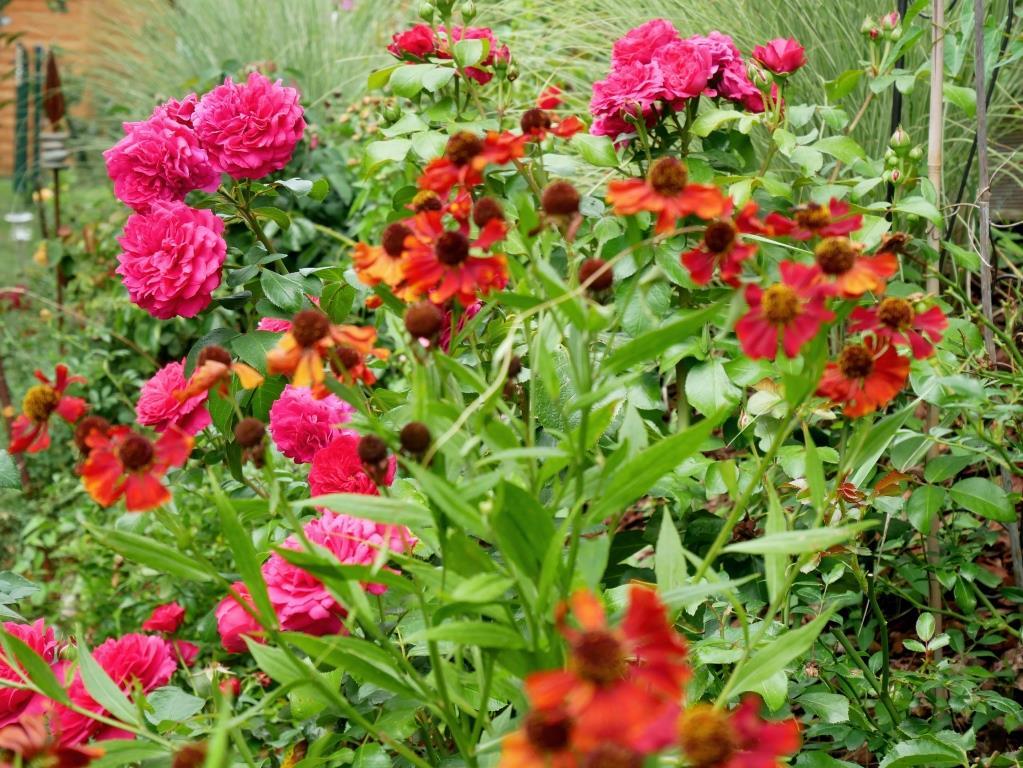 Sonnenbraut und Rose Red Leonardo da Vinci