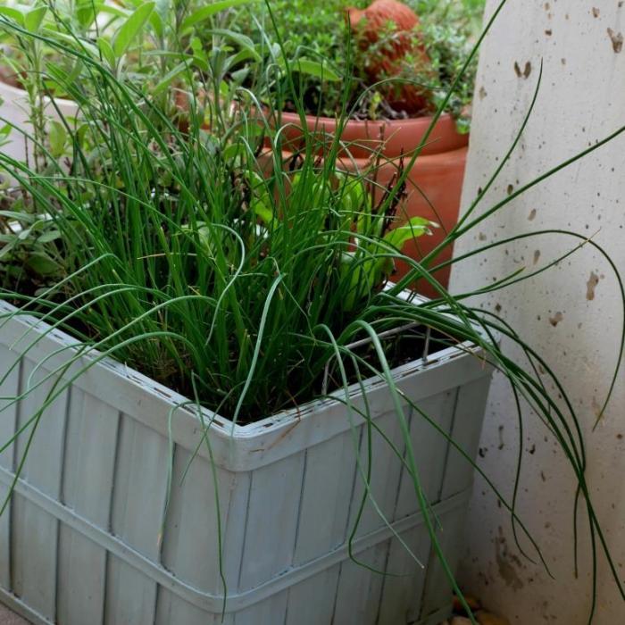 Mini-Kräuterkist'l für die Terrasse selber machen
