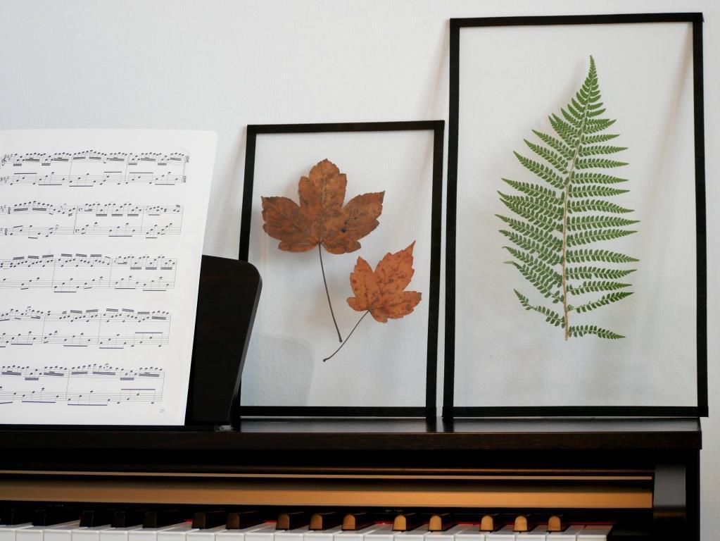 Die Pflanzenbilder mit dem schwarzen Rahmen wirken besonders elegant und kommen vor einer weißen Wand am Besten zur Geltung