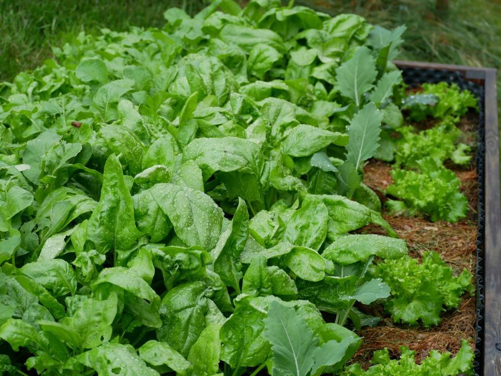 Ernten, ernten, ernten - dank Mischkultur im Nutzgarten
