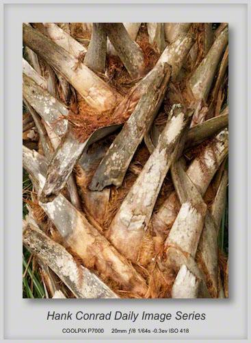 1/11/2013 Palm Trunk Design