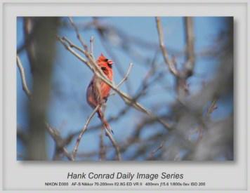 3/13/2013 Cardinal Singing
