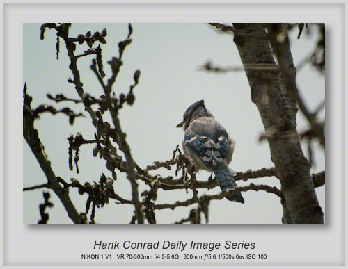 4/27/2013 Blue Jay Colors