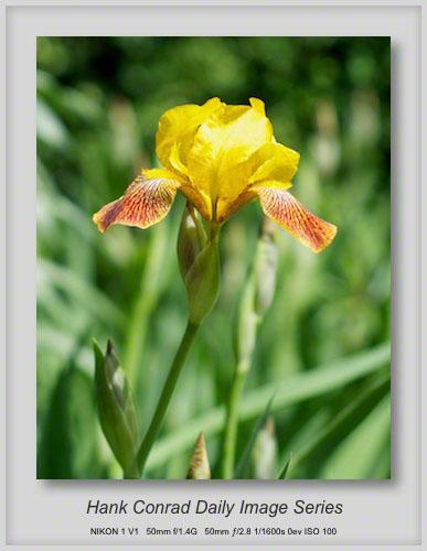 5/22/2013 Another Iris