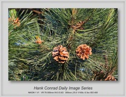 6/19/2013 Pine Cones