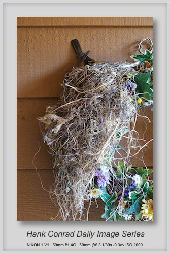 6/20/2013 Robin's Nest
