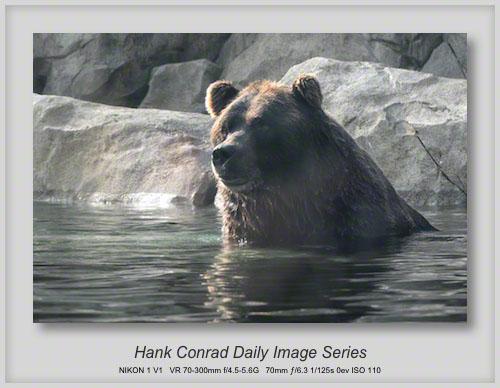 8/10/2013 Bear @ Zoo