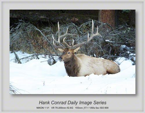10/25/2013 Bull Elk