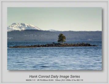 10/26/2013 Yellowstone Lake Tree