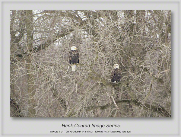 2/17/2014 Starved Rock Eagles