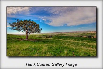 Lone Tree on the Badlands