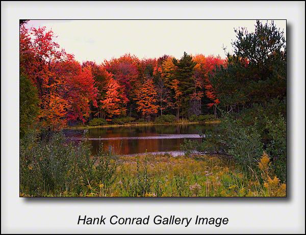 Michigan Color
