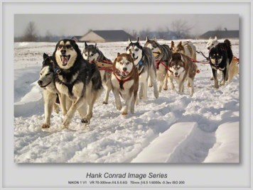 Husky Dogsled Team