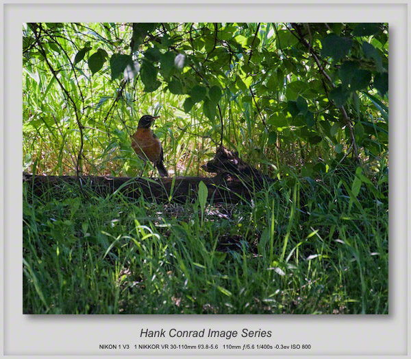 Robin Hiding