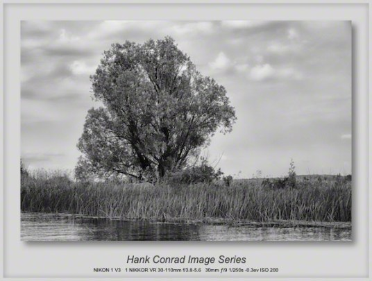 Lone Tree on the Water