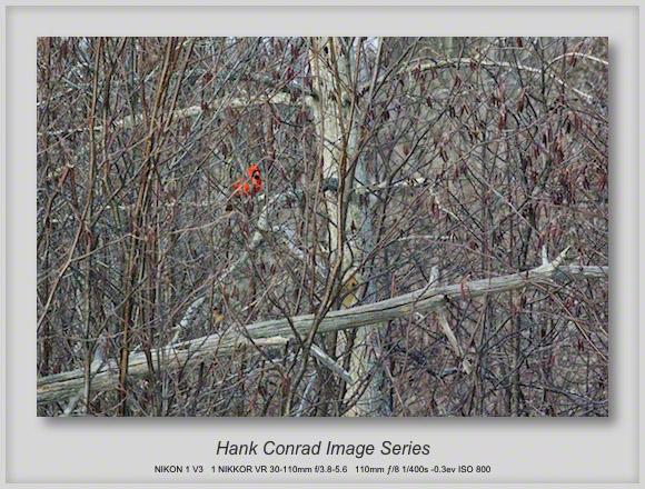 Cardinal Color
