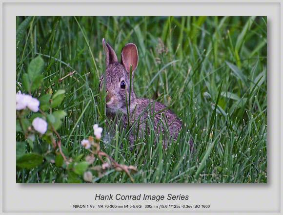 peekaboo Rabbit