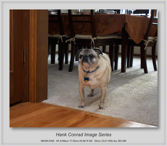 7 Image Story | Where's the Pug's Turkey?