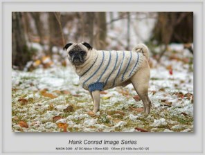7 Image Story | What Gives; Pug in Snow on Thanksgiving