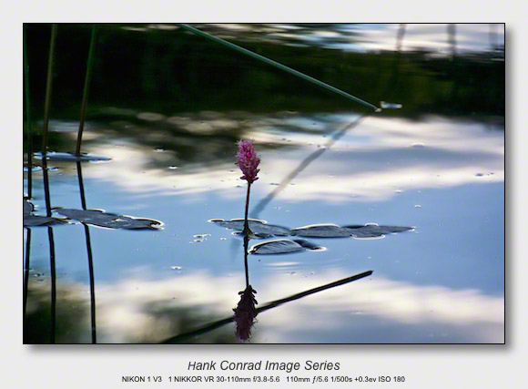 Reflections on 2017 | Water Smartweed