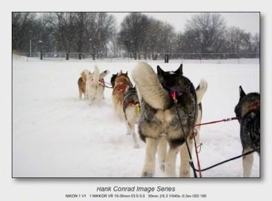 Husky Dogsled Party | Thru a Husky's Eyes