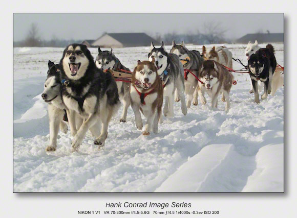 Husky Dogsled Party | Let's Go Faster