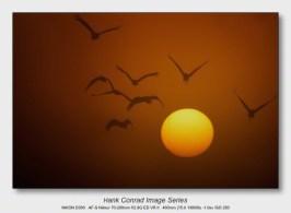 Sandhills on the Platte   Sunrise Flight