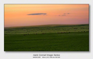 American Bison   Bison over the Horizon