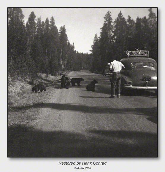 Yellowstone 1953 | Feeding Bears