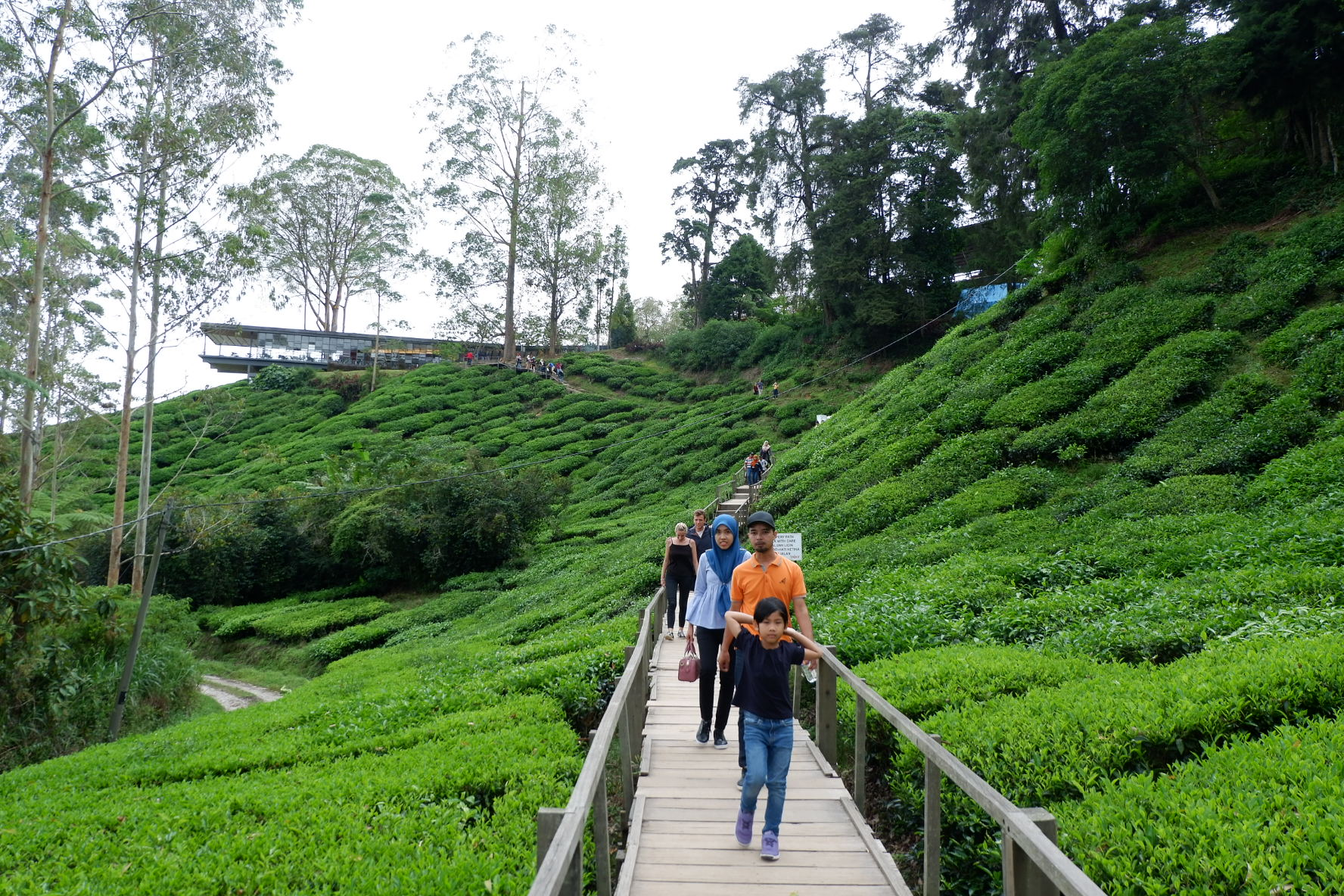 IMG 5233 - A Getaway in Cameron Highlands that will gives you more than you deserve!