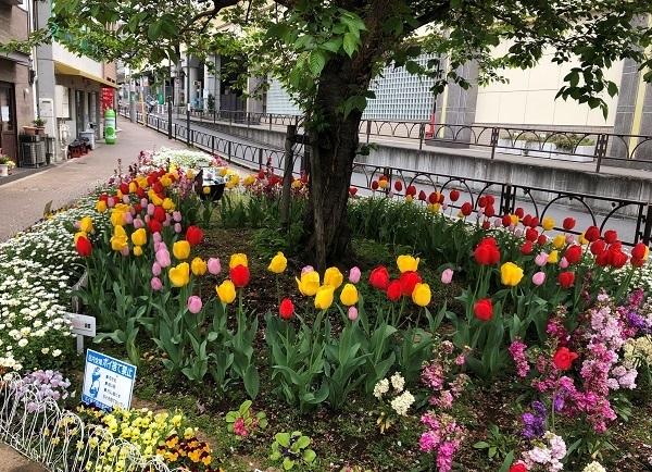 豪徳寺駅近くの美しい花壇