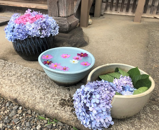 202006美しく咲くあじさいがいけられた奈良・般若寺