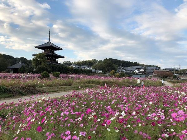 201811秋の奈良一人旅。世界遺産・法起寺