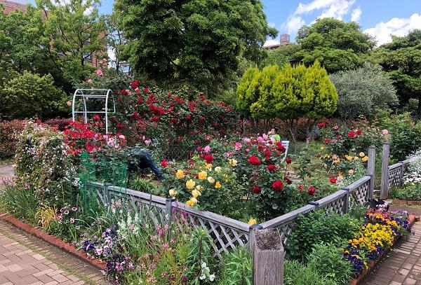 202105江東区・木場公園のバラの花園