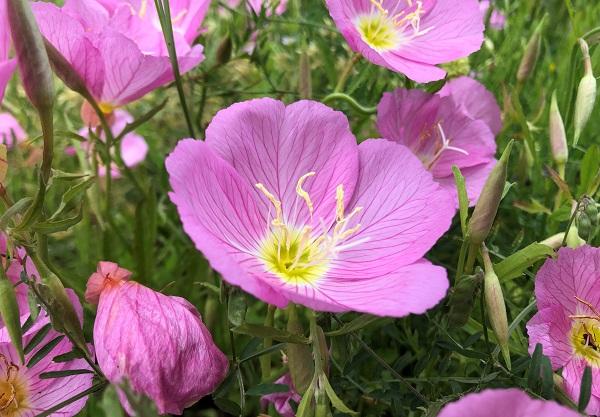 202105江東区・木場公園の都市緑化植物園に咲くかわいい花