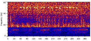 Signal of the 52-hertz whale