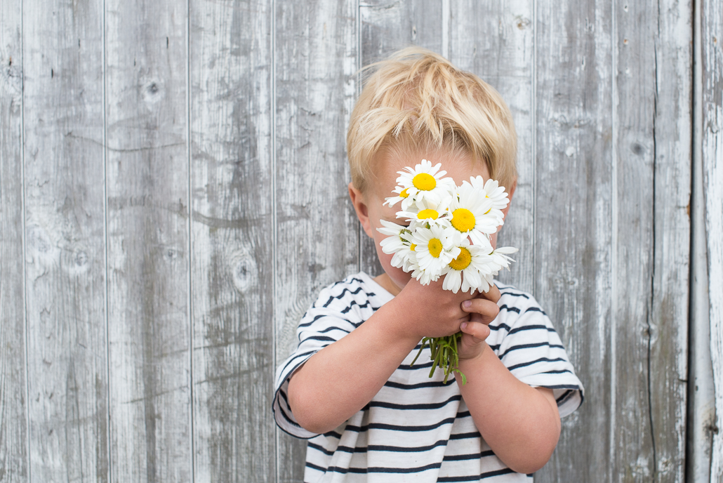little boy holding daisies, photographing children and family portraiture