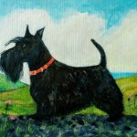 Angus the Scottish Terrier