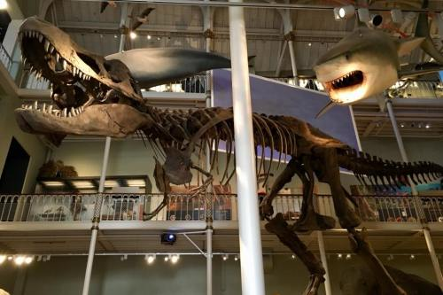NMS T Rex - A visit to the National Museum in Edinburgh - HH Lifestyle Travel