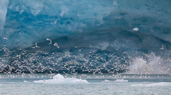 Monaco glacier in Liefdefjord, Svalbard