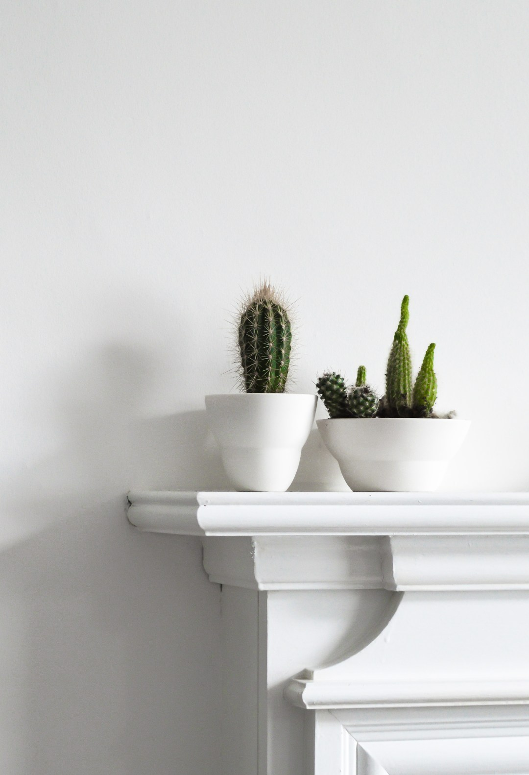 repotting cacti , urban jungle bloggers, indoor plants, styling, Scandinavian syling
