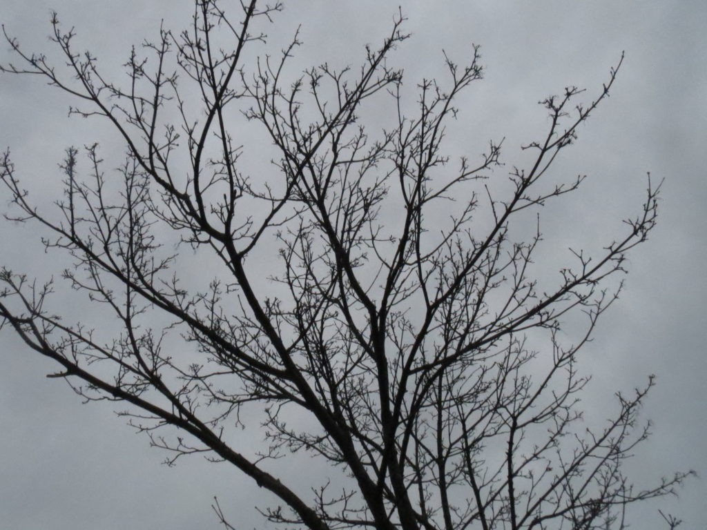 more bare branches