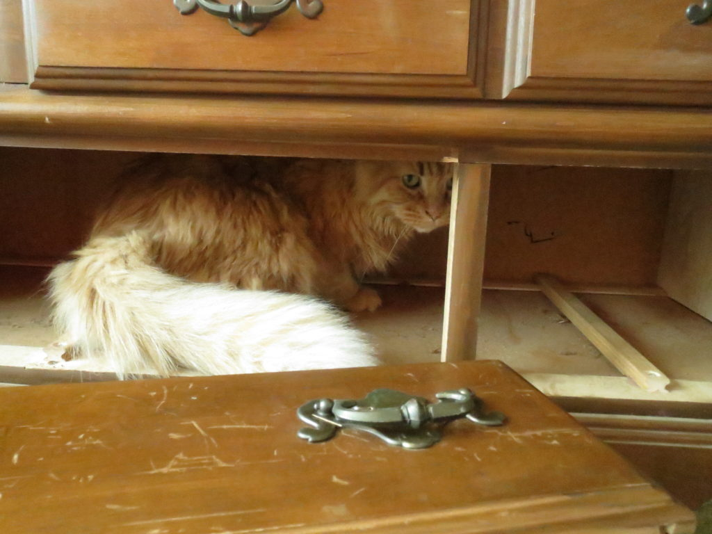 Gus helps as I repair an old bureau